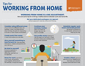 Working from Home Infographic Thumb